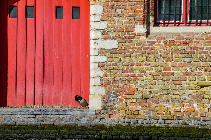Canard à Bruges (Belgique)